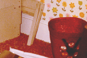 The Amityville Horror Truth Website The Shoe Picture